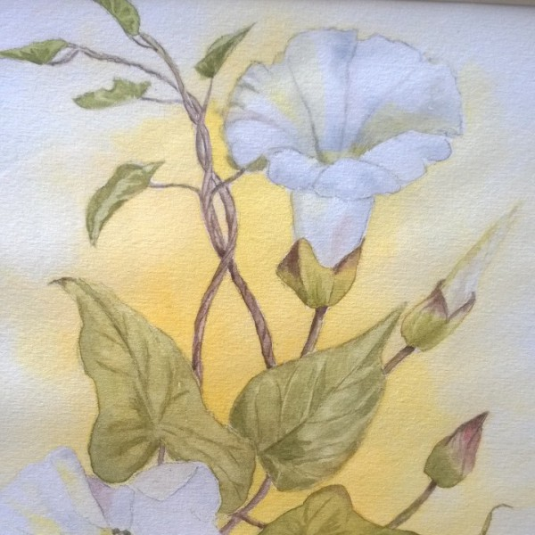 Dos Bindweed watercolour